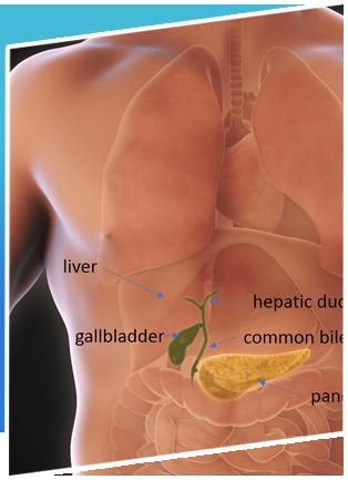 Urology Treatment 09 Cholecystectomy Gall Bladder Removal