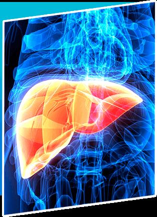Multi-Organ Transplant Layer 2051