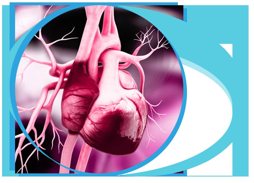 Repair of the Heart Valve